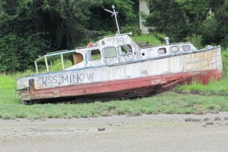 MINNOW-1